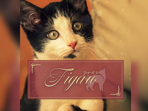 メンズエステメンズエステ Figaroのバナー画像